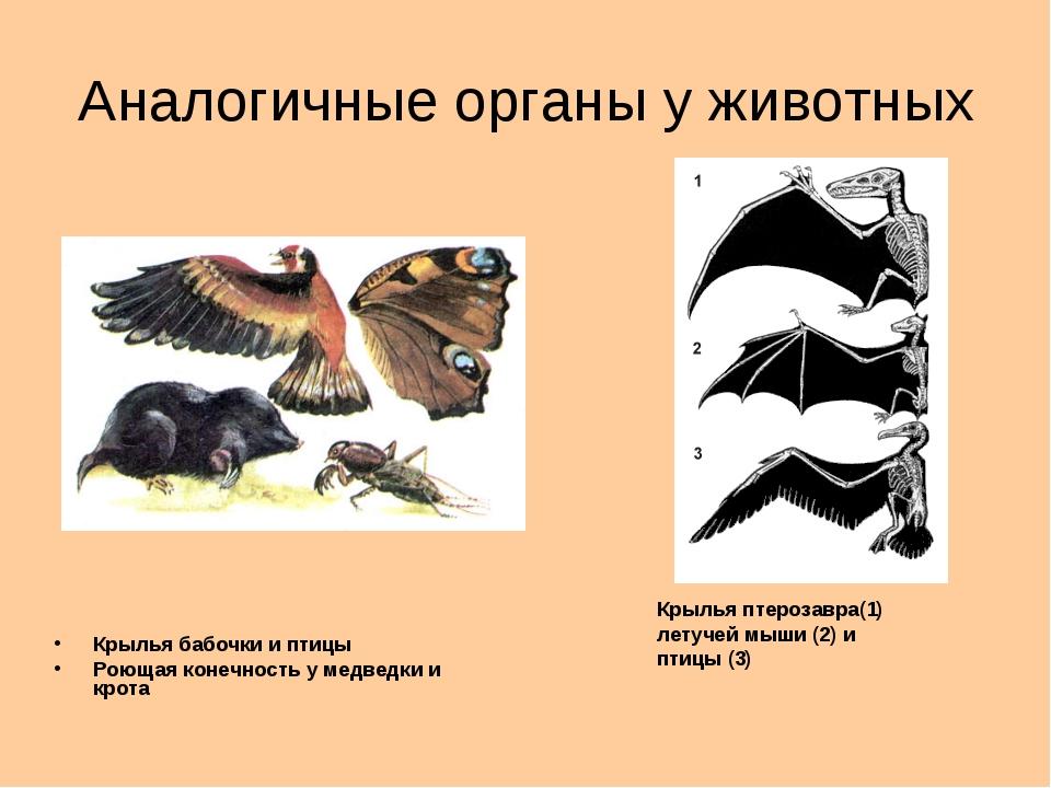 Аналогичные органы у животных Крылья бабочки и птицы Роющая конечность у медв...