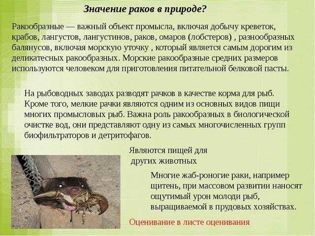 Значение раков в природе? Ракообразные — важный объект промысла, включая добы...