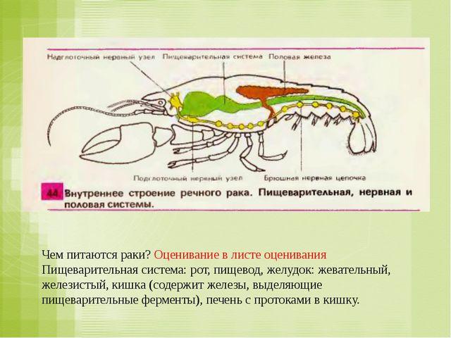 Чем питаются раки? Оценивание в листе оценивания Пищеварительная система: рот...