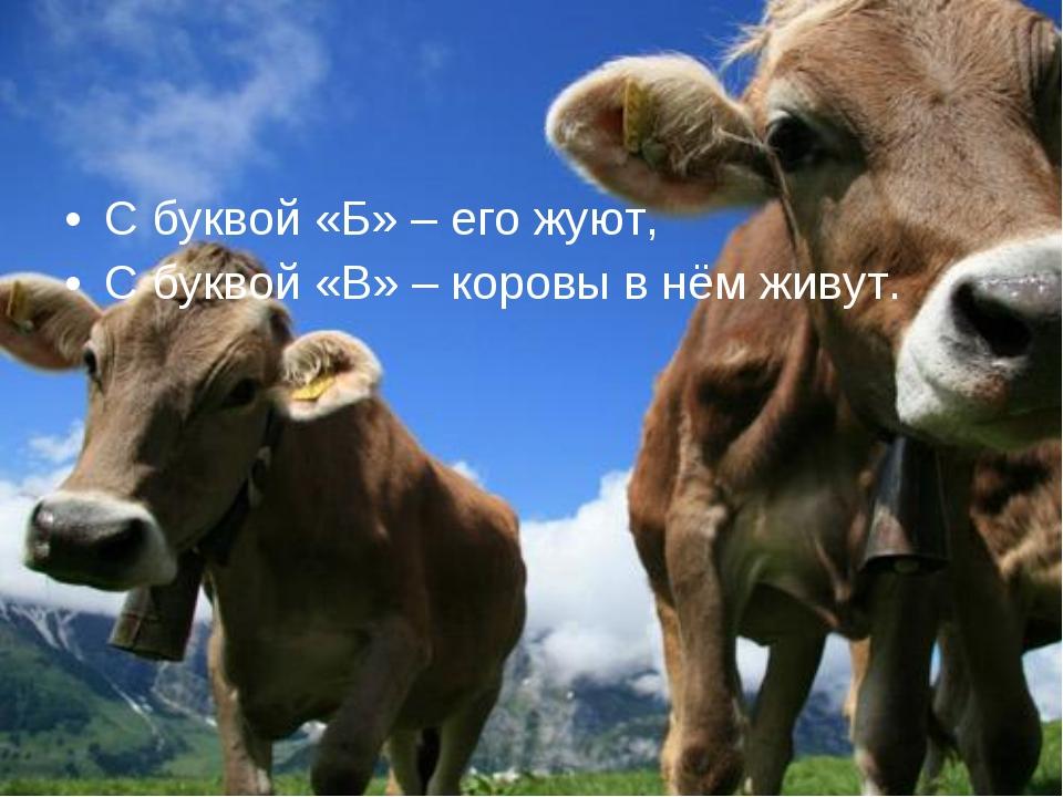 С буквой «Б» – его жуют, С буквой «В» – коровы в нём живут.