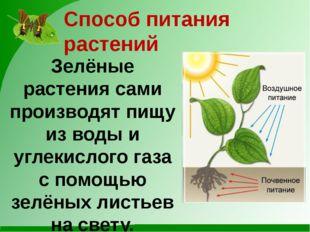 Способ питания растений Зелёные растения сами производят пищу из воды и углек