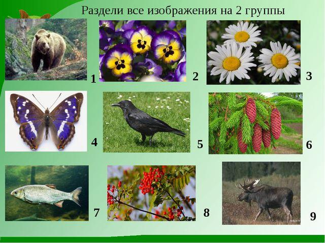 Раздели все изображения на 2 группы 1 2 3 4 5 6 7 8 9