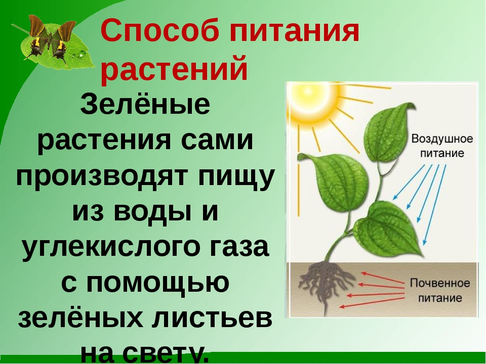 Способ питания растений Зелёные растения сами производят пищу из воды и углек...