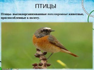 ПТИЦЫ Птицы- высокоорганизованныетеплокровныеживотные, приспособленные к по