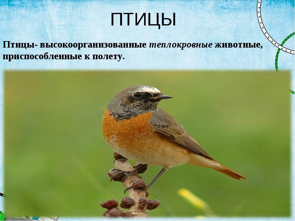 ПТИЦЫ Птицы- высокоорганизованныетеплокровныеживотные, приспособленные к по...