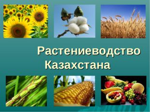 Растениеводство Казахстана