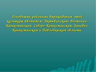 Основными районами выращивания этой культуры являются: Актюбинская, Восточно-