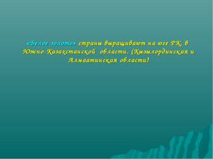«Белое золото» страны выращивают на юге РК, в Южно-Казахстанской области. (Кы