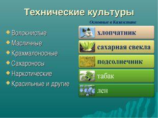 Технические культуры Волокнистые Масличные Крахмалоносные Сахароносы Наркотич