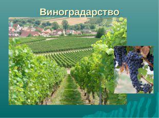 Виноградарство