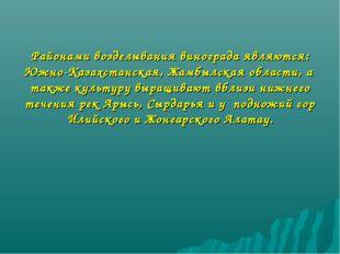 Районами возделывания винограда являются: Южно-Казахстанская, Жамбылская обла