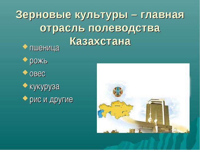 Зерновые культуры – главная отрасль полеводства Казахстана пшеница рожь овес...