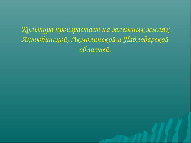 Культура произрастает на залежных землях Актюбинской, Акмолинской и Павлодарс...
