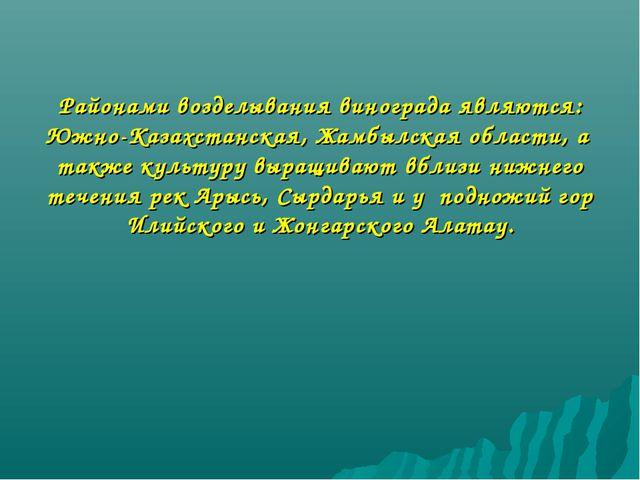 Районами возделывания винограда являются: Южно-Казахстанская, Жамбылская обла...