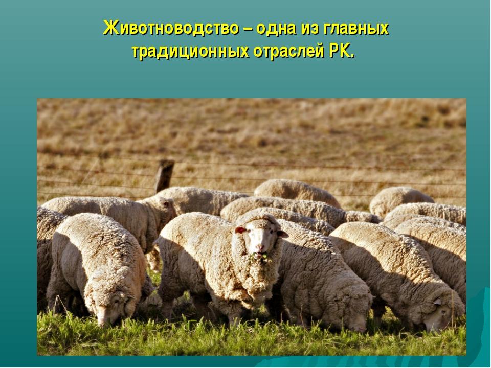 Животноводство – одна из главных традиционных отраслей РК.