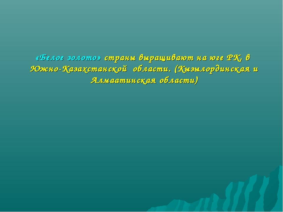 «Белое золото» страны выращивают на юге РК, в Южно-Казахстанской области. (Кы...