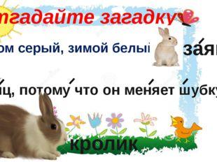 Отгадайте загадку Летом серый, зимой белый. заяц Заяц, потому что он меняет ш