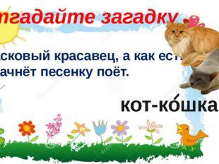 Отгадайте загадку Ласковый красавец, а как есть начнёт песенку поёт. кот-кошка