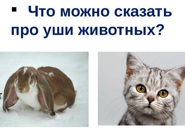 Что можно сказать про уши животных?