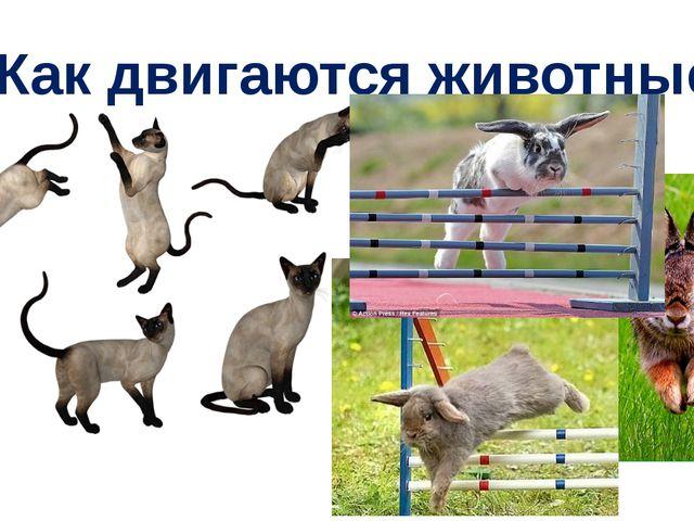 Как двигаются животные?