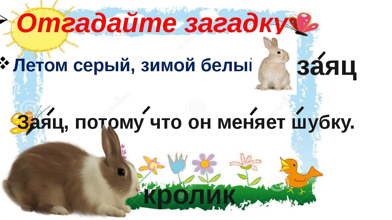 Отгадайте загадку Летом серый, зимой белый. заяц Заяц, потому что он меняет ш...