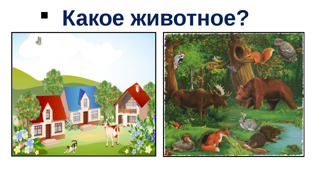 Какое животное?