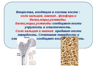 Вещества, входящие в состав кости : соли кальция, магния , фосфора и белки,жи