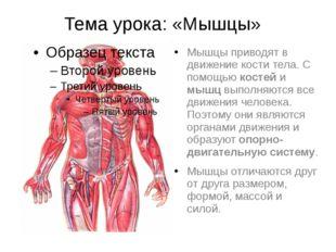 Тема урока: «Мышцы» Мышцы приводят в движение кости тела. С помощью костей и