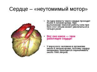 Сердце – «неутомимый мотор» За одну минуту через сердце проходит более 5 литр