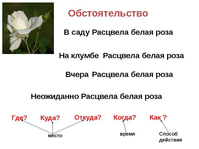 Обстоятельство Расцвела белая роза Расцвела белая роза Расцвела белая роза Ра...