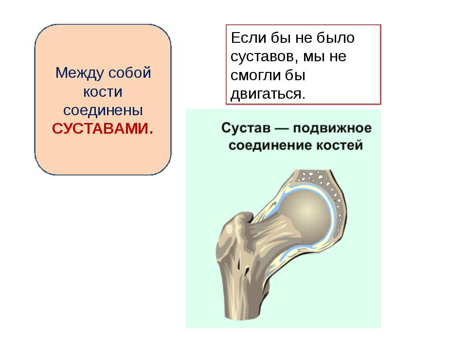 Между собой кости соединены СУСТАВАМИ. Если бы не было суставов, мы не смогли...