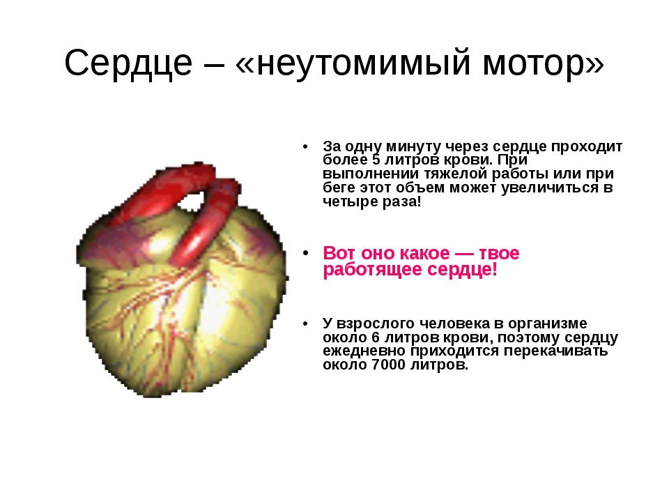 Сердце – «неутомимый мотор» За одну минуту через сердце проходит более 5 литр...