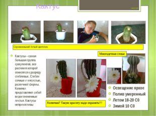 Цветок №10 Кактусы—самая большая группа суккулентов, все растения которой от