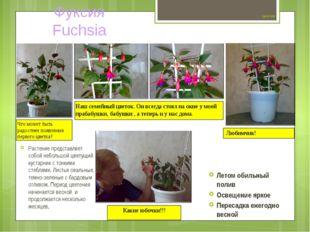 Цветок №6 Растение представляет собой небольшой цветущий кустарник с тонкими