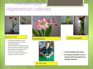 Цветок №7 Гиппеаструм соединяет в себе прекрасные цветки с не очень привлека