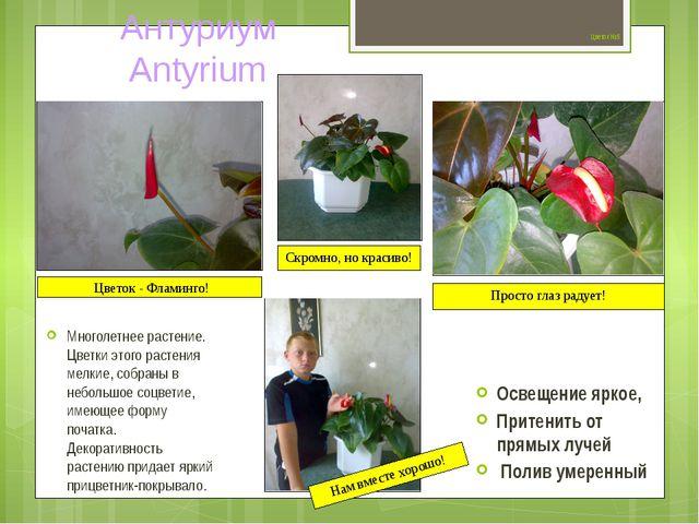 Цветок №5 Многолетнее растение. Цветки этого растения мелкие, собраны в небо...