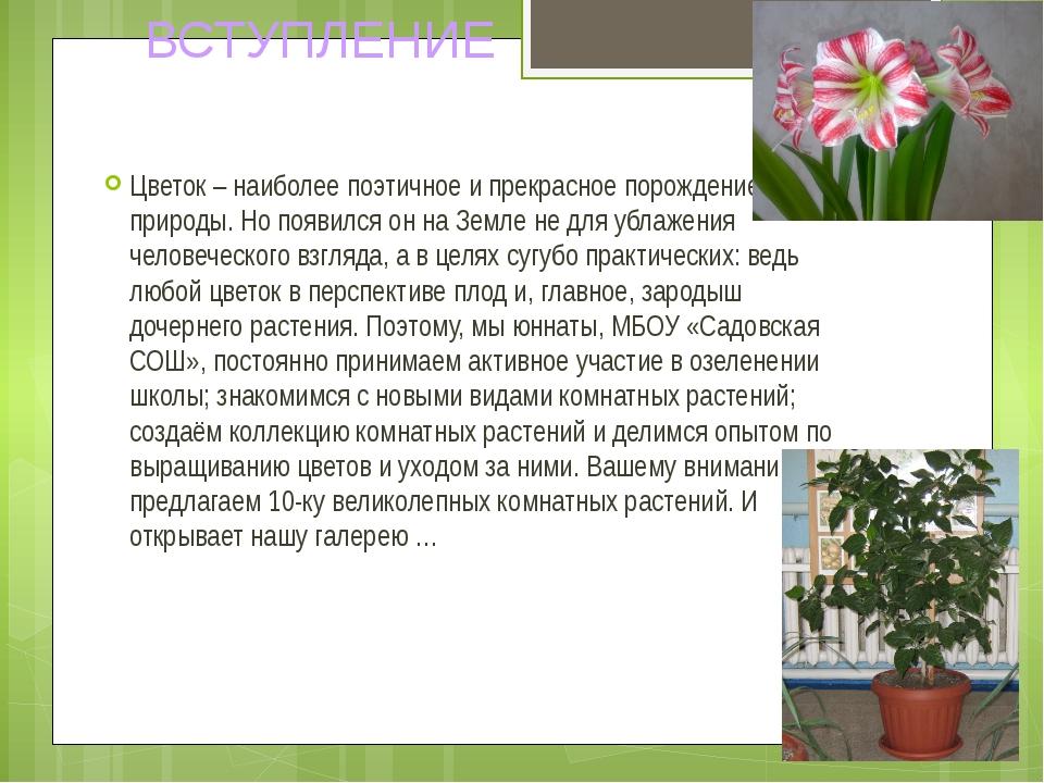 Цветок – наиболее поэтичное и прекрасное порождение природы. Но появился он н...