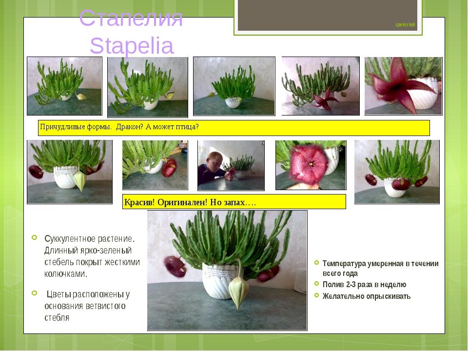 Цветок №9 Суккулентное растение. Длинный ярко-зеленый стебель покрыт жестким...