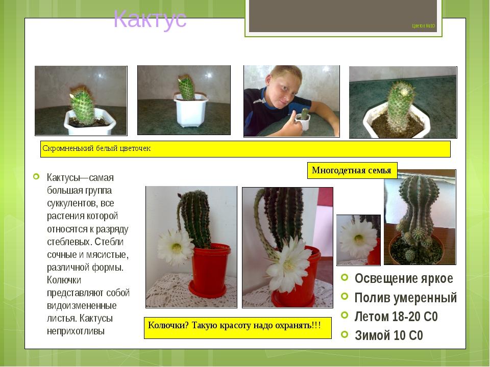 Цветок №10 Кактусы—самая большая группа суккулентов, все растения которой от...