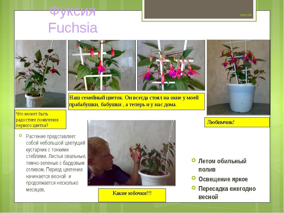 Цветок №6 Растение представляет собой небольшой цветущий кустарник с тонкими...