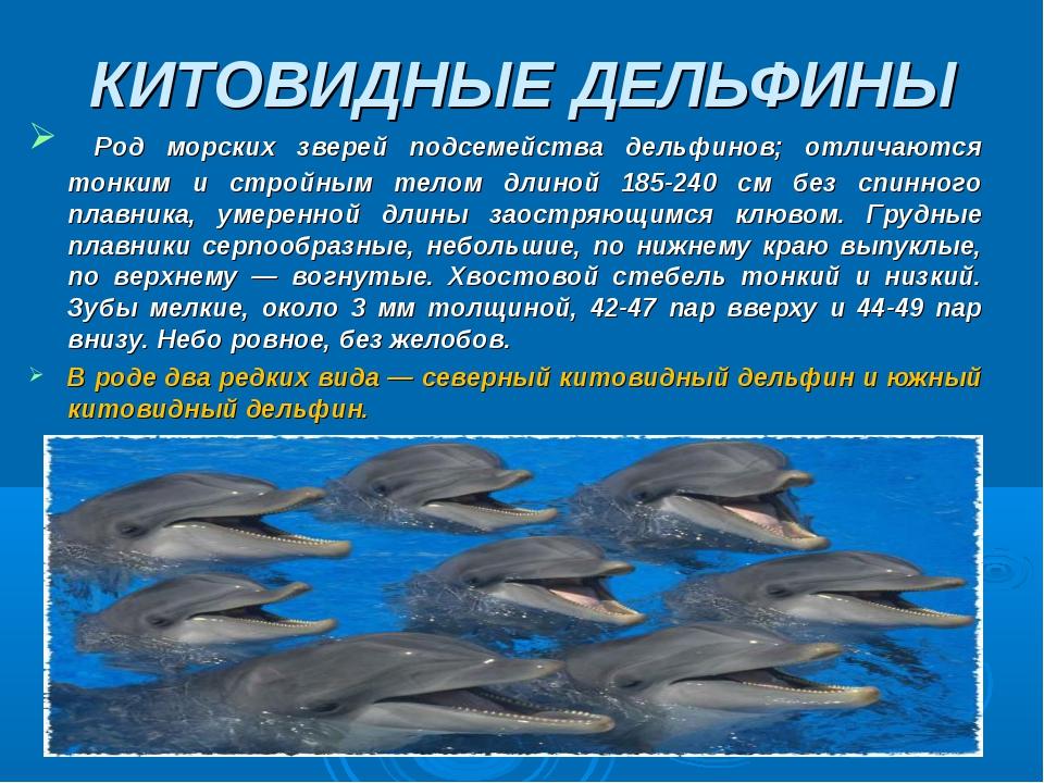 виды дельфинов список и фото тело