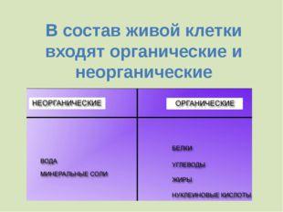 Благодаря хлоропластам (при наличии воды и углекислого газа) образуются орган