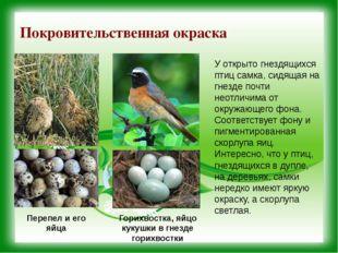 Покровительственная окраска У открыто гнездящихся птиц самка, сидящая на гнез
