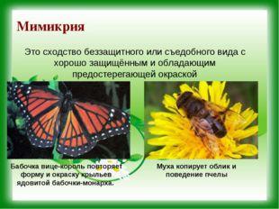 Мимикрия Бабочка вице-король повторяет форму и окраску крыльев ядовитой бабоч