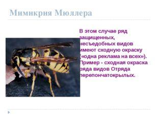 Мимикрия Мюллера В этом случае ряд защищенных, несъедобных видов имеют сходну