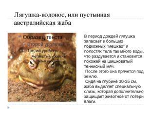 Лягушка-водонос, или пустынная австралийская жаба В период дождей лягушка зап