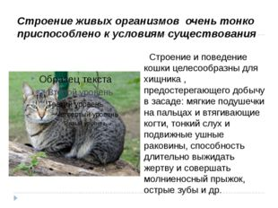 Строение и поведение кошки целесообразны для хищника , предостерегающего доб