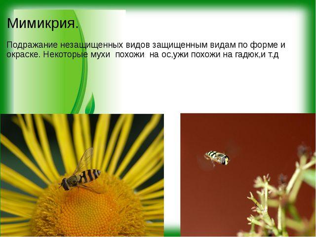Мимикрия. Подражание незащищенных видов защищенным видам по форме и окраске....