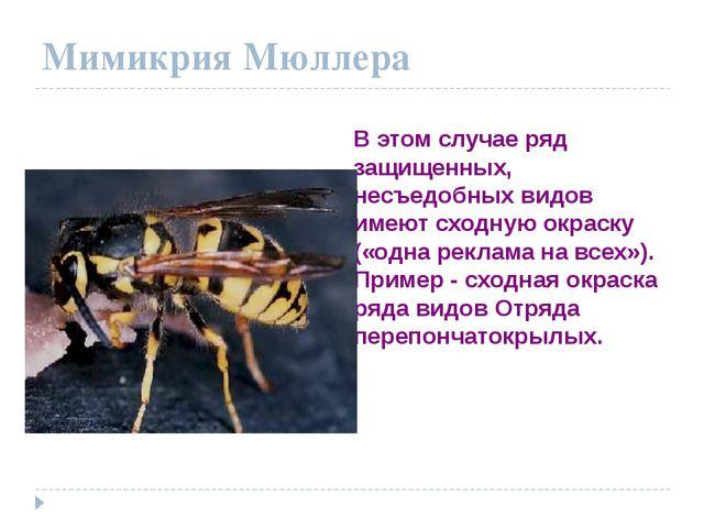 Мимикрия Мюллера В этом случае ряд защищенных, несъедобных видов имеют сходну...