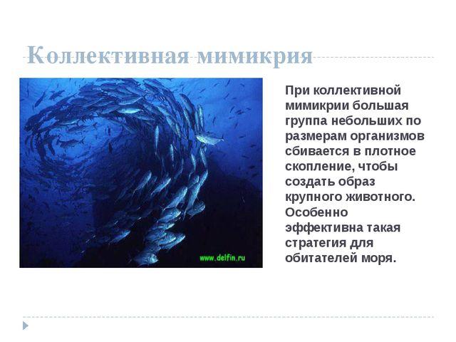 Коллективная мимикрия При коллективной мимикрии большая группа небольших по р...